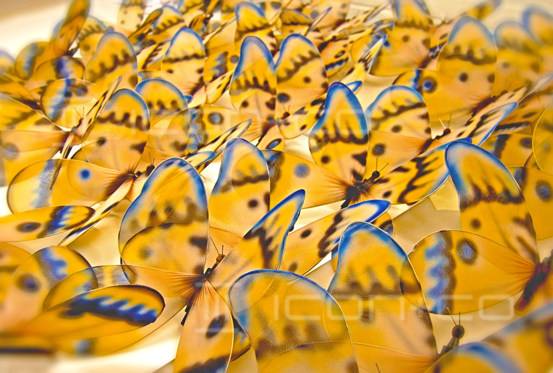 butterfly props manufacturers, vm window fashion, visual merchandising, spring summer butterfly